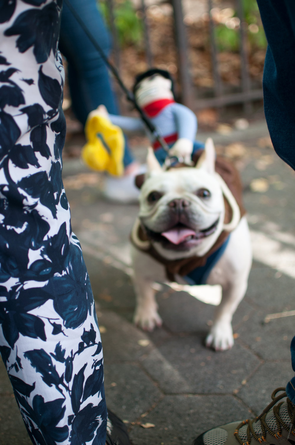 10.21.17_Tompkins Square Dog Parade-56.jpg