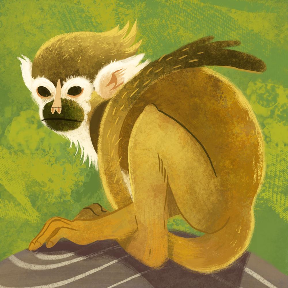 illo_squirrel.png