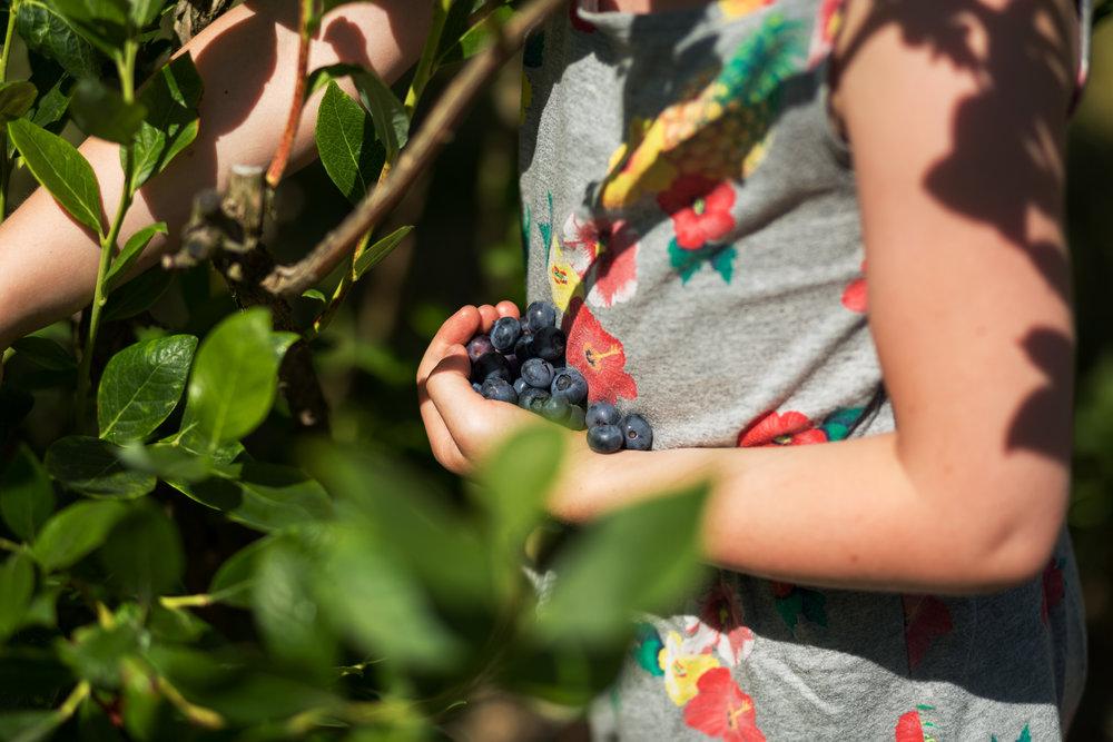 girl holding blueberries in hand