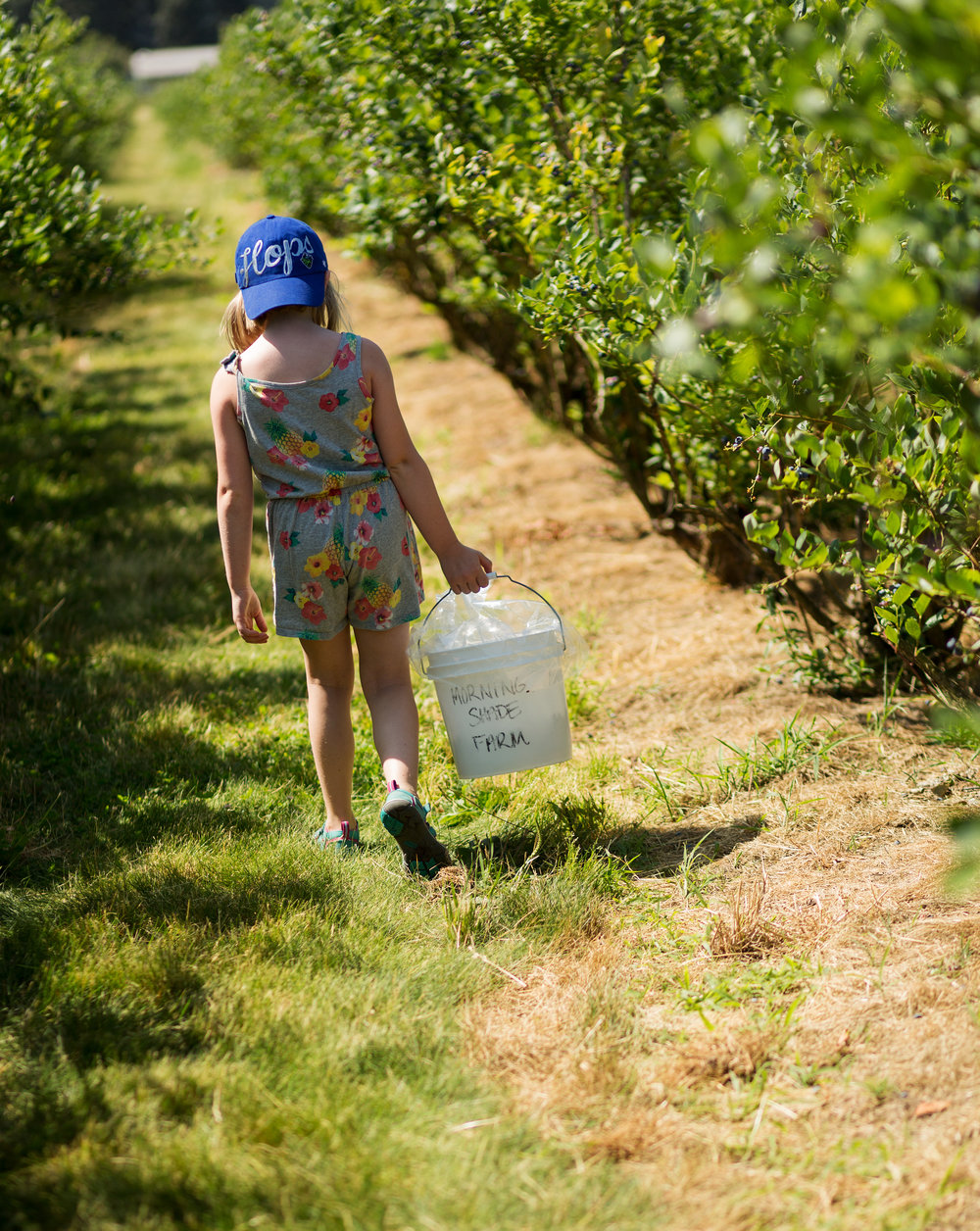 girl with blueberry bucket heading down row