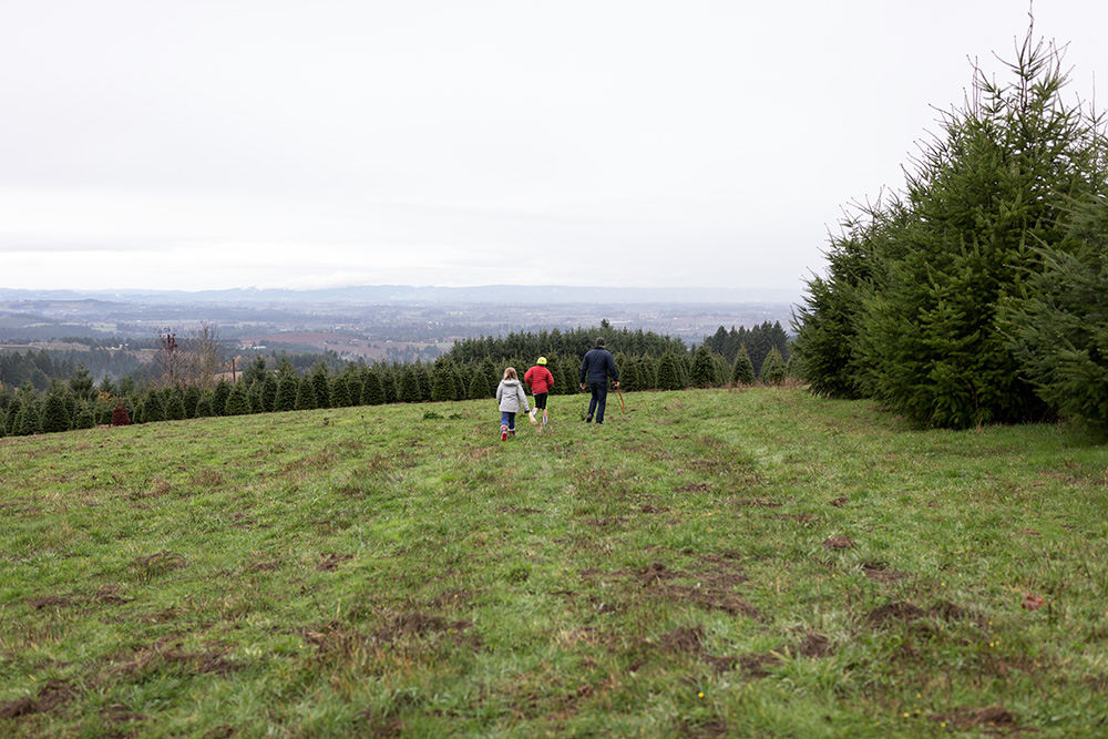 family on christmas tree farm willamette valley view