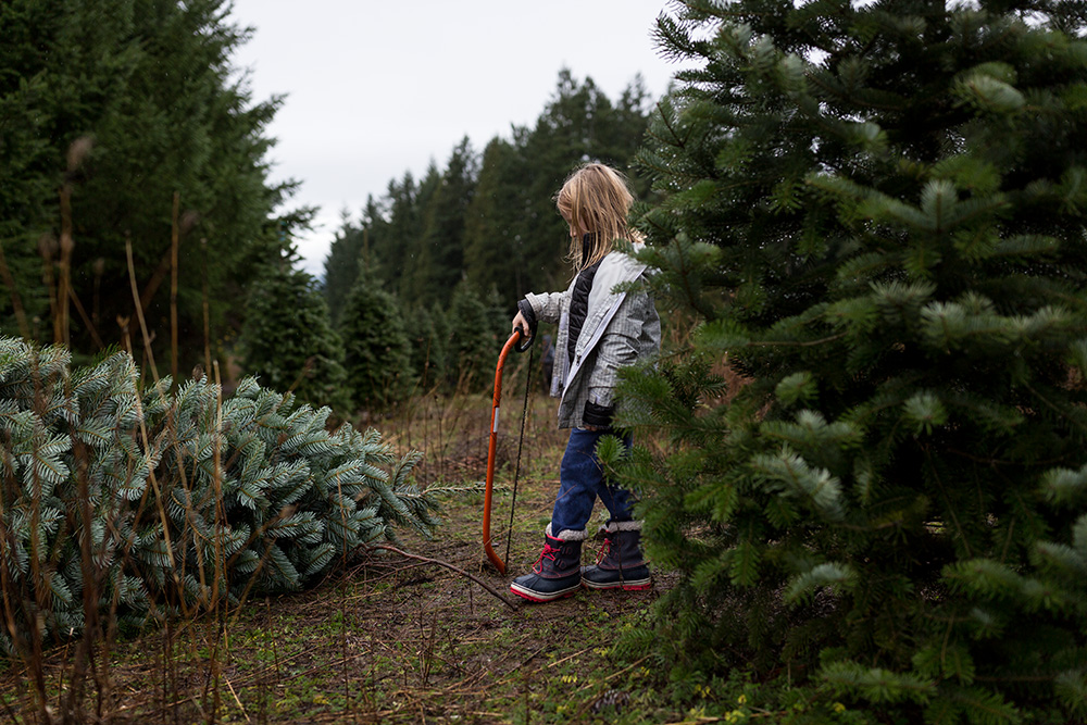 girl with saw and cut christmas tree on ground