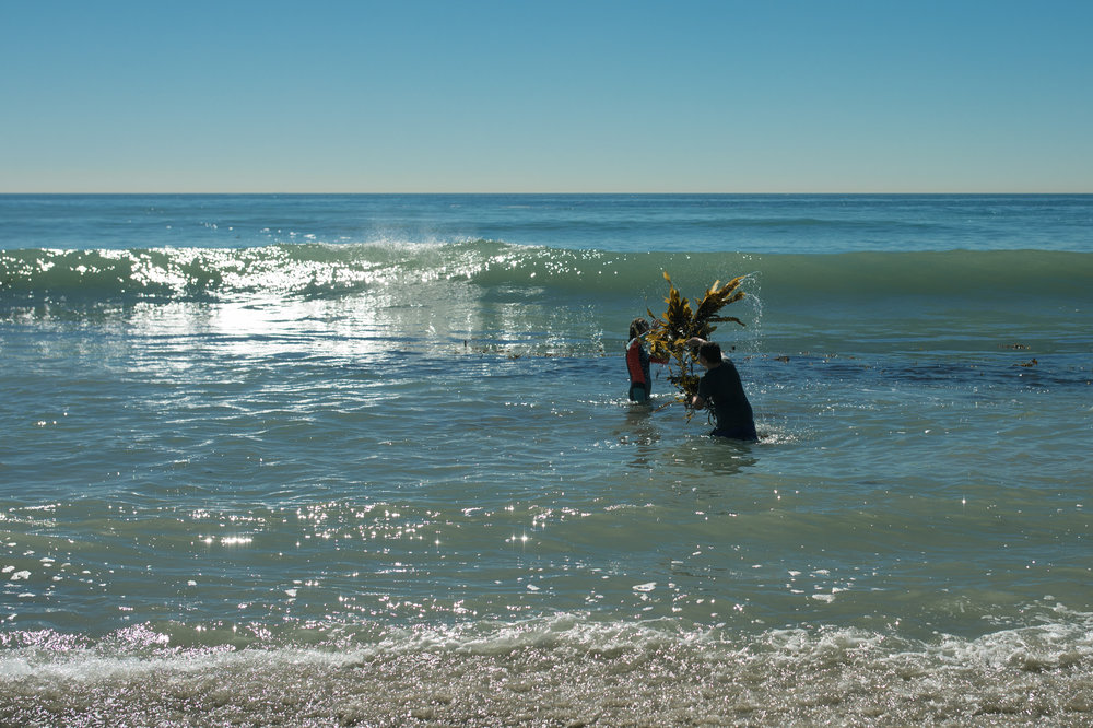 Children gather seaweed in the ocean and toss it at one another.