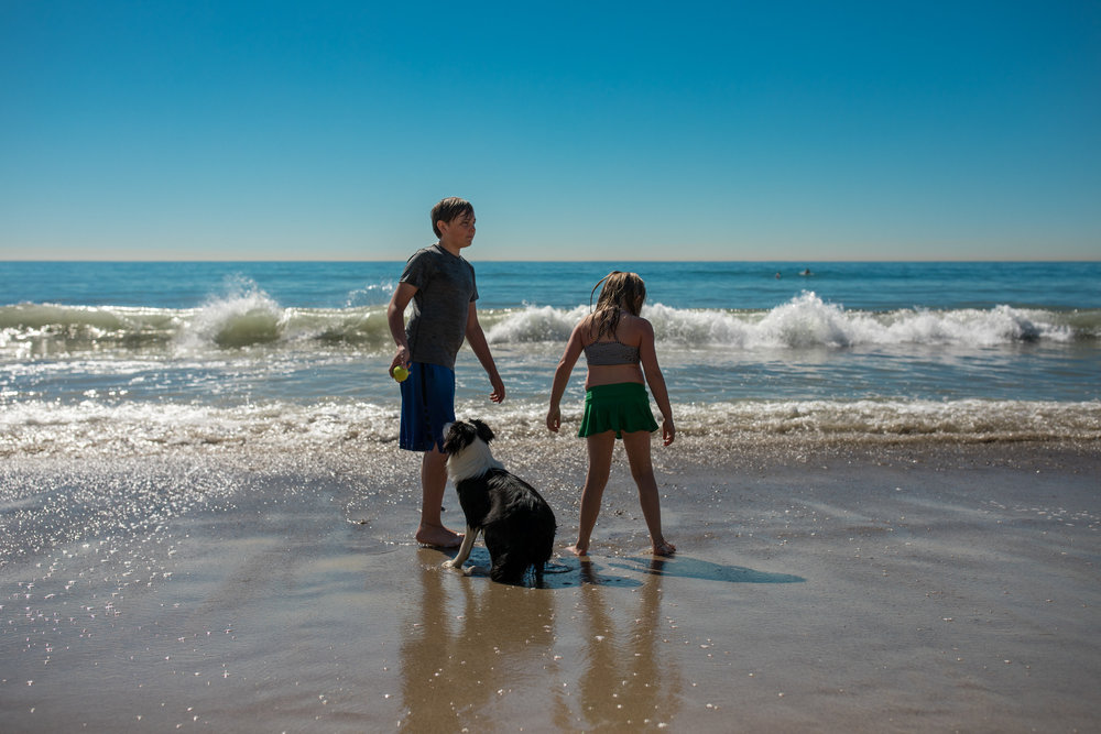 Brother and sister play on the beach while a friend's dog waits patiently for his ball to be thrown.