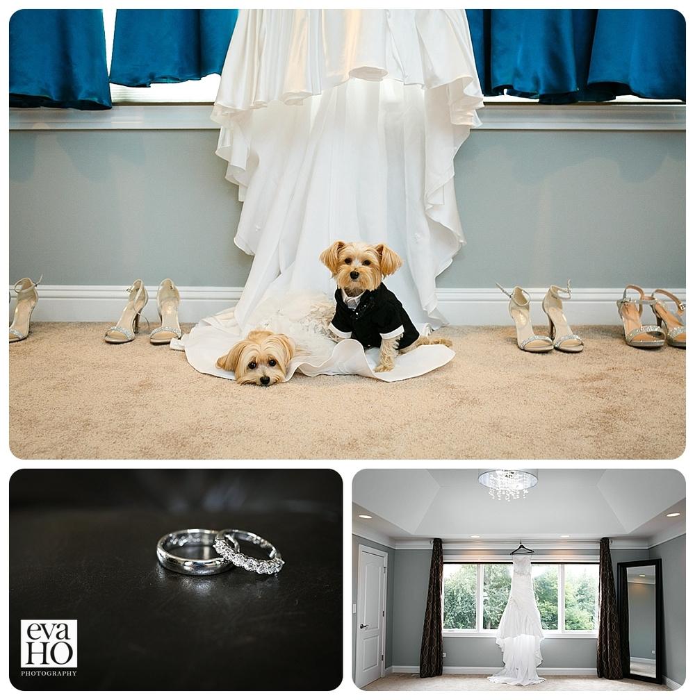 Puppy love and wedding details