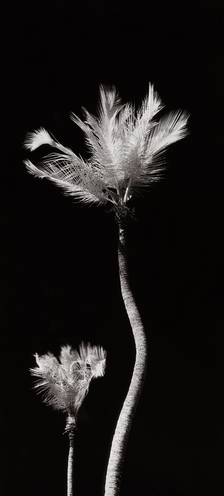 infrared palm 1.jpg