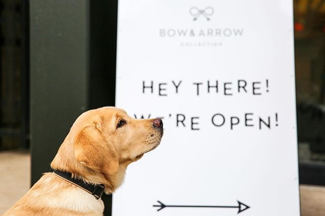 Thanks for letting us work on something fun this morning! We're back open for business 🐶😉 #bowandarrowcollection