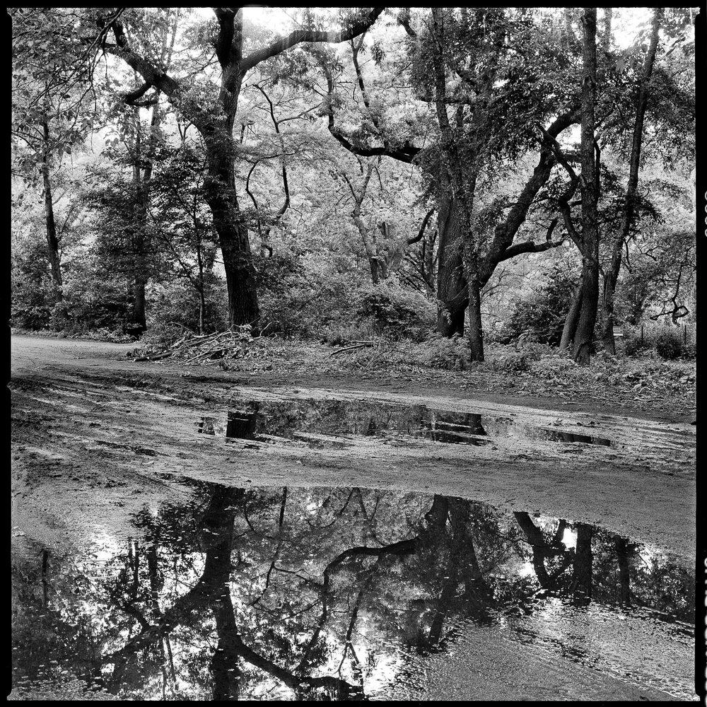 Central Park_01.jpg