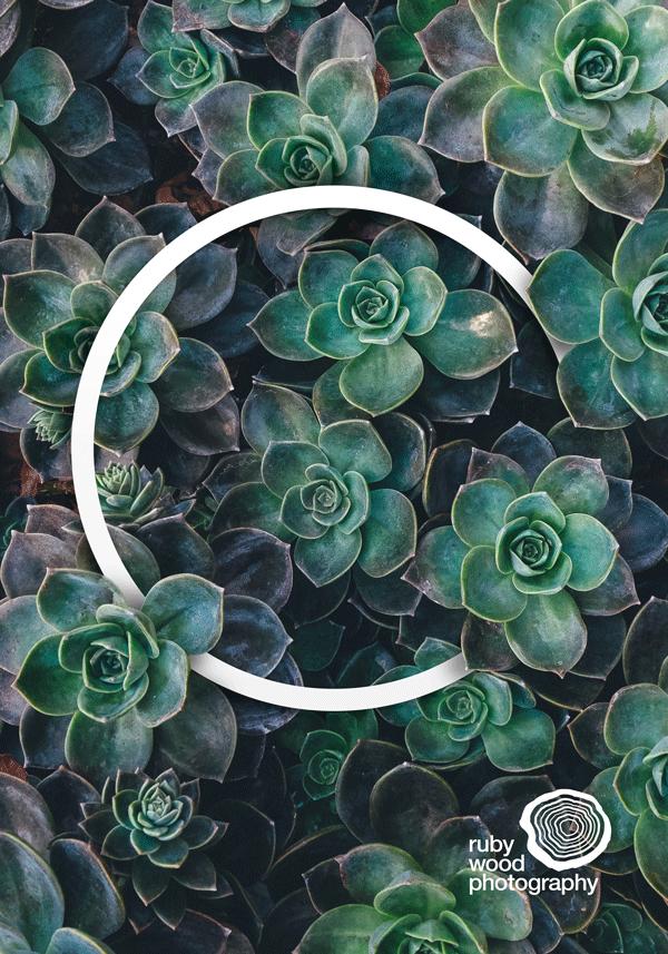 Succulent Lover