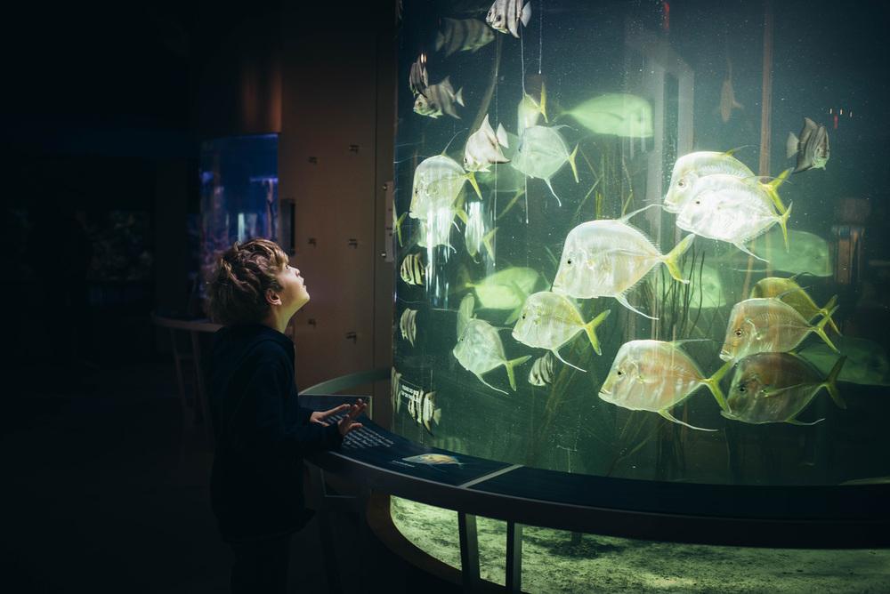 around_town_aquarium.jpg
