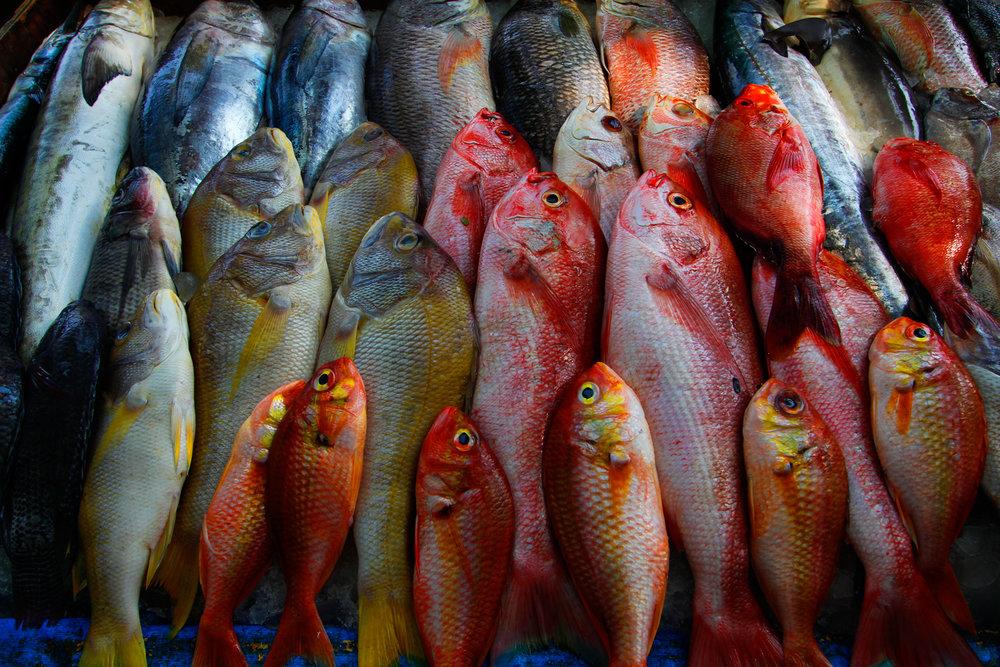 Cochin.Fish.jpg