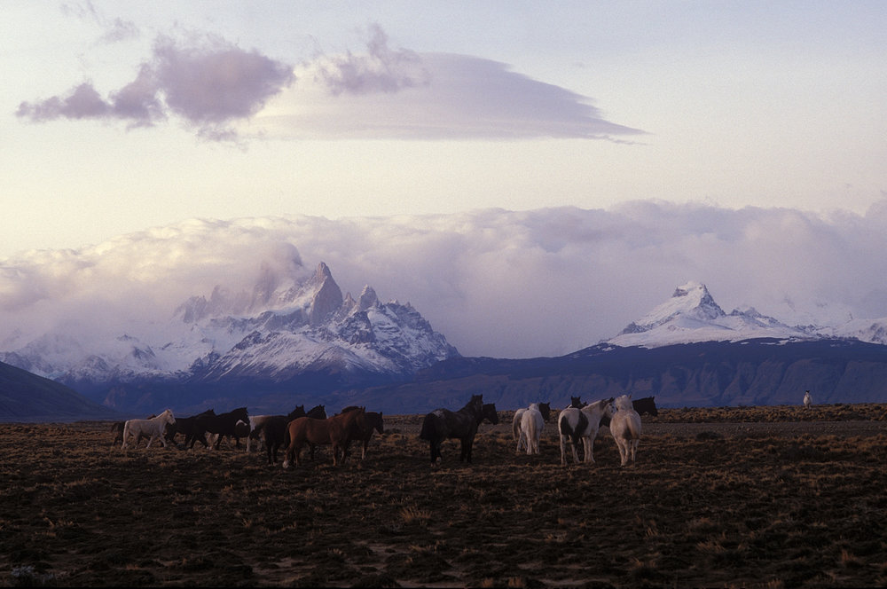 Patagonia.LagoViedma.Horses(1994).jpg