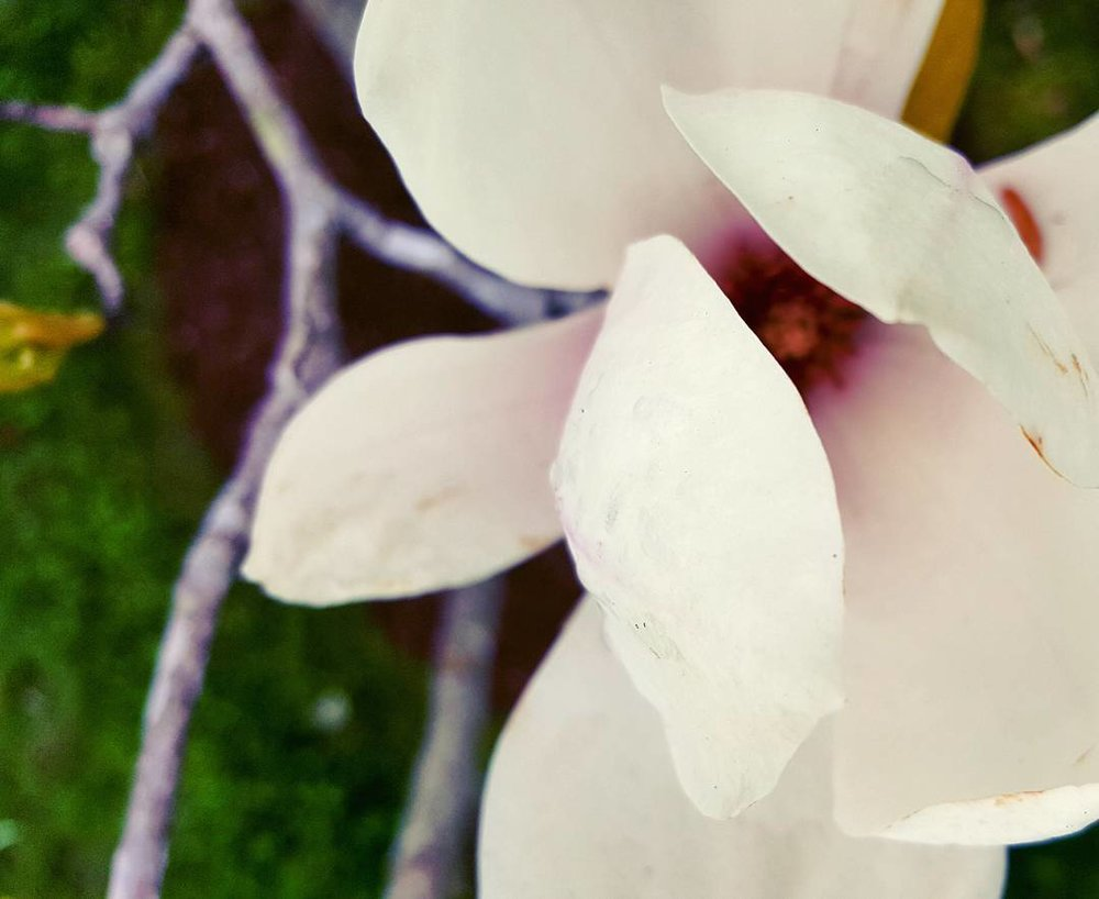 Newport Flower 1