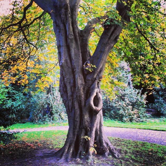 Iveagh Tree