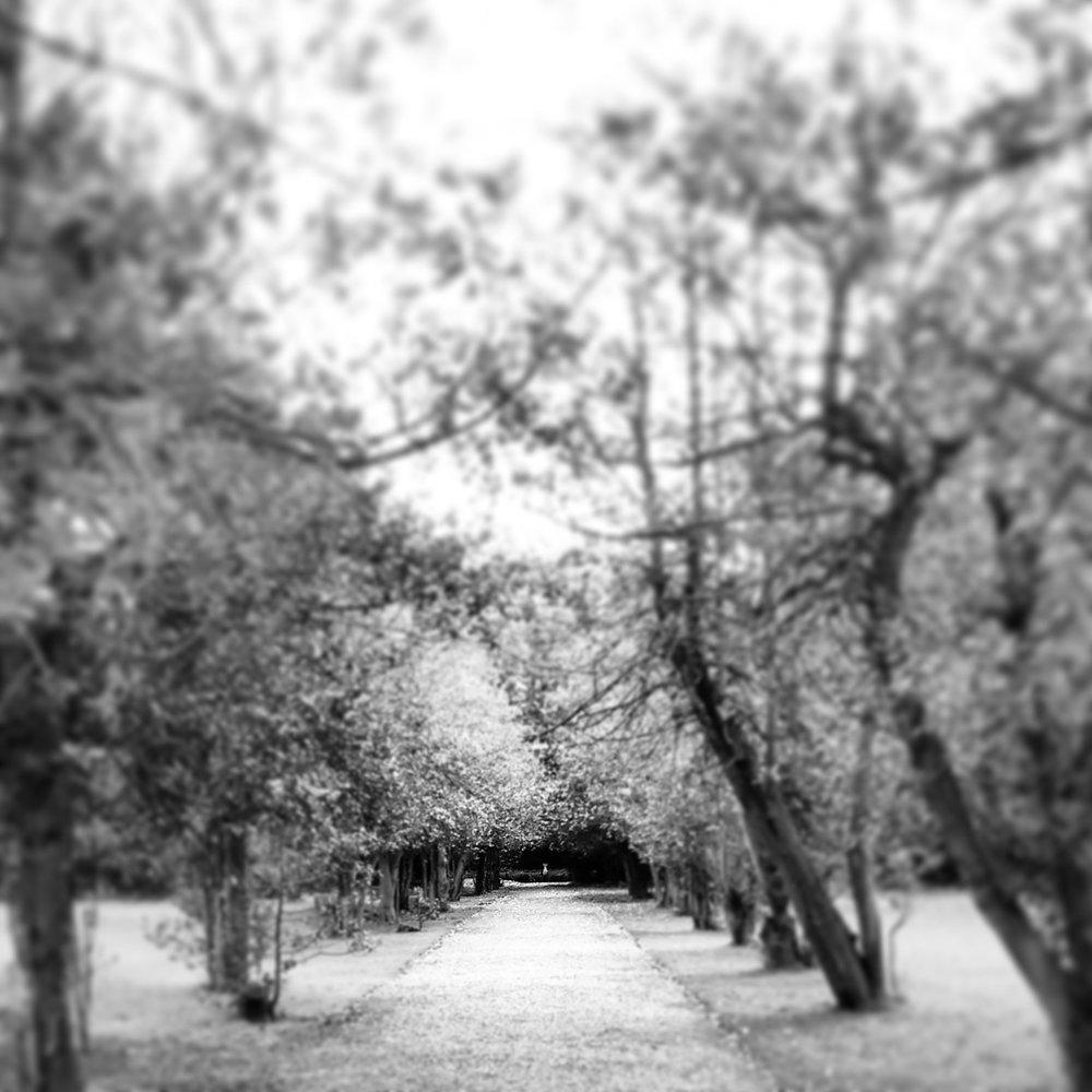 Iveagh Gardens B&W
