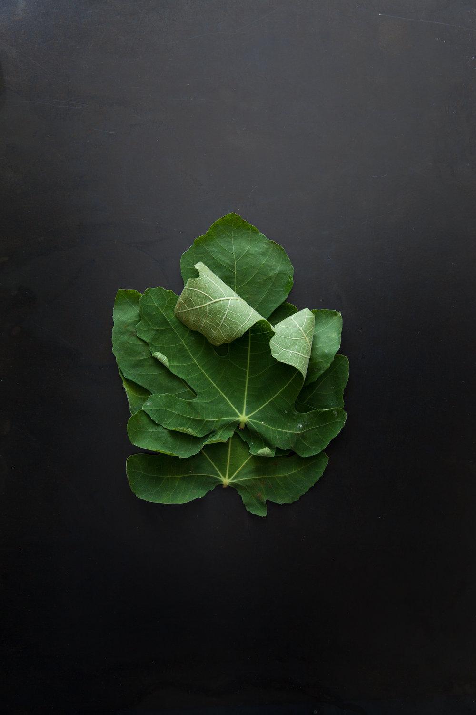 fig leaves.jpg