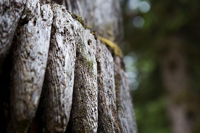 Carved hands of a SGang Gwaii mortuary pole, being consumed by the forest and returning full circle to the earth. #haidagwaii #gohaidagwaii #pnw #exploreBC #aboriginalart