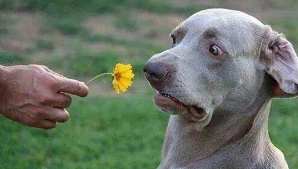 dog scared of flower.jpg