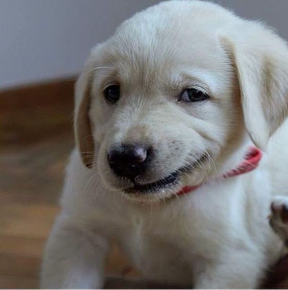 puppy smirk.jpg