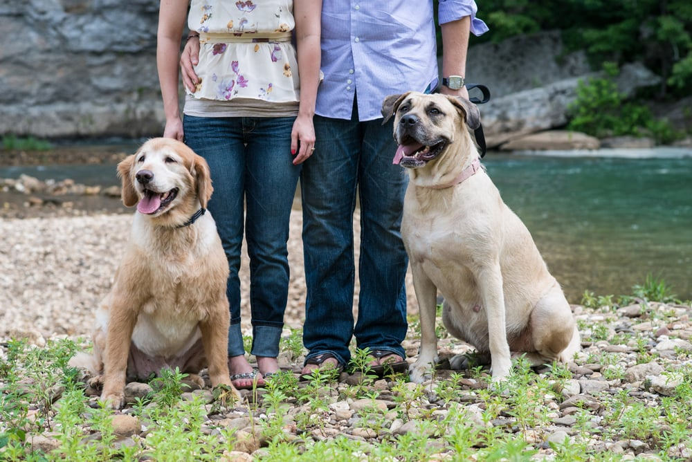 Engagement couple with their two dogs