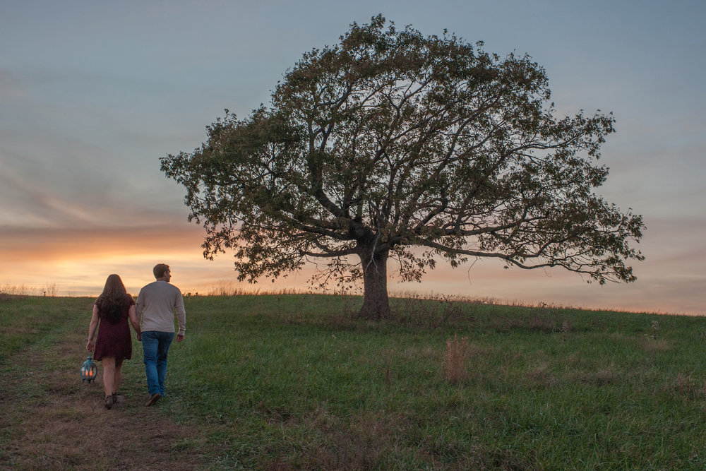 Couple walks toward sunset near a big tree