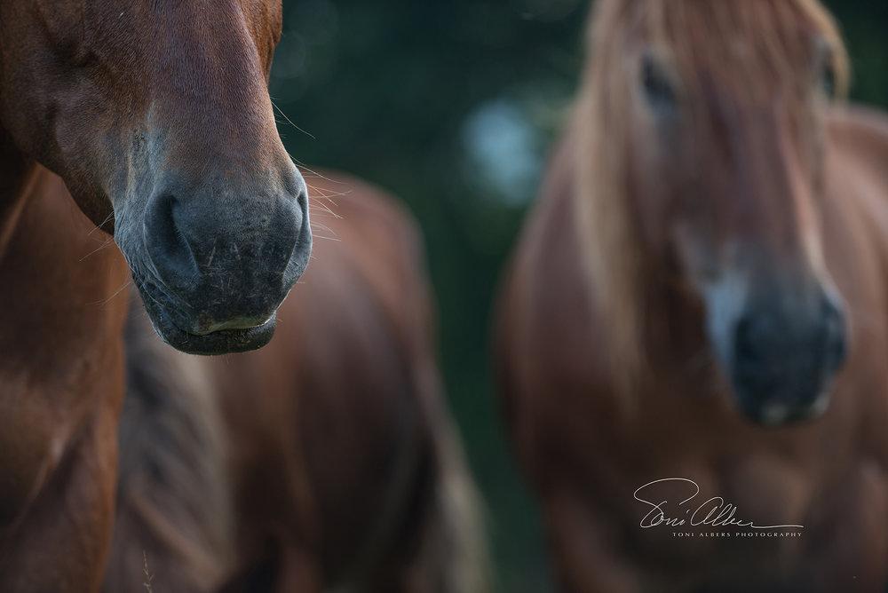 Horses1 copy.jpg