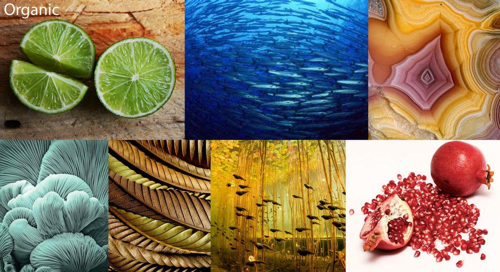 Organic Inspiration Board.jpg