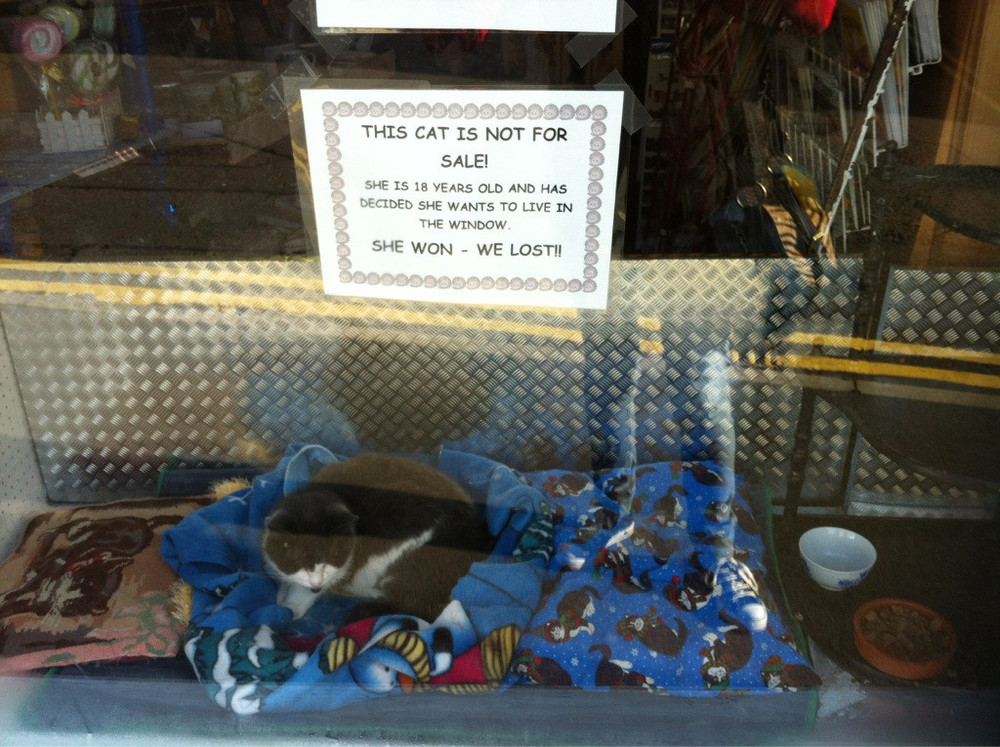 awwww-cute :     Privilages of age. Spotted this old lady in a shop window in the Scottish Borders this morning      This sign, the cat, and the shop are all awesome.  A.M.