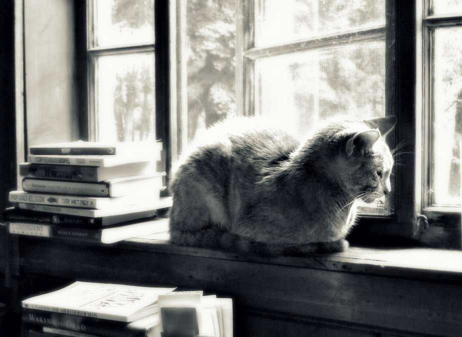 I think this is one of my favorite images so far. There's something about the cat perched on the windowsill and how the light through the window panes highlights its fur that I really love. - A.M.
