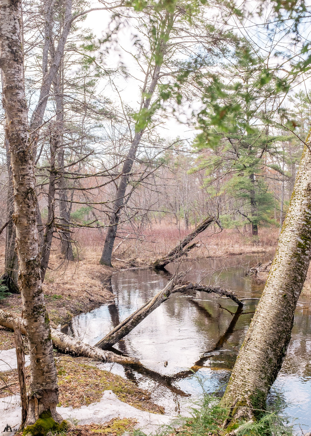 Crooked River Woods