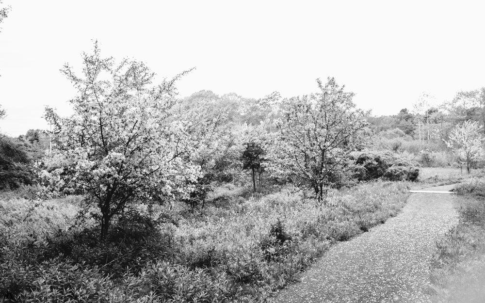 Pleasant Hill