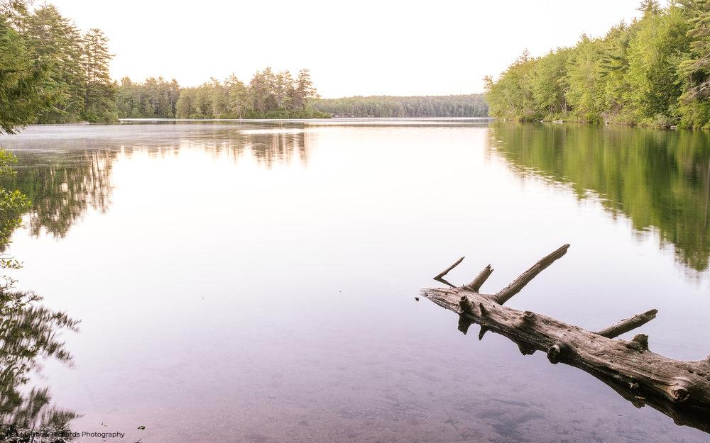 Trickey Pond Naples Maine