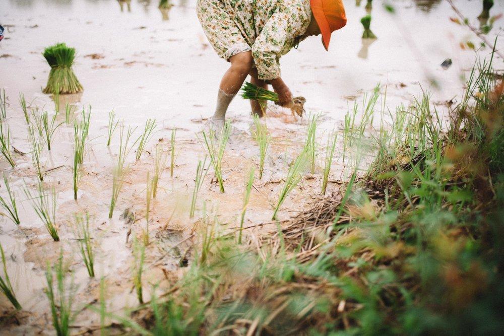 Cambodge-14.jpg