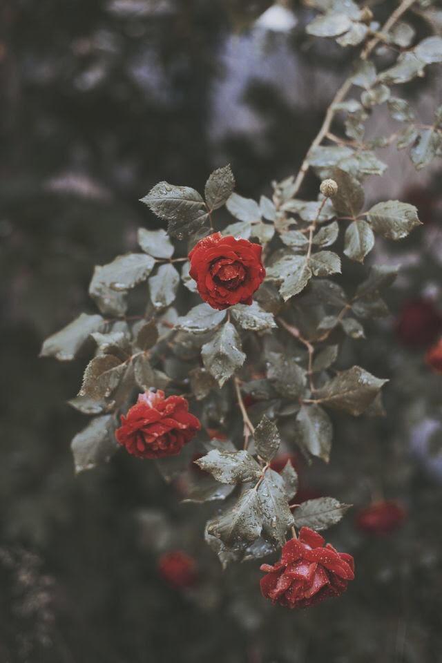 Ciscandra-nostalghia-music