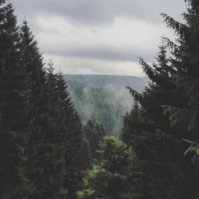 ciscandra-nostalghia-trees.jpg