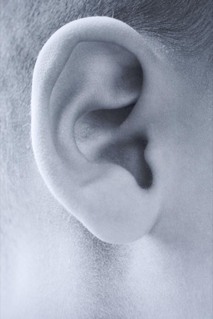 Ear  24698.jpg