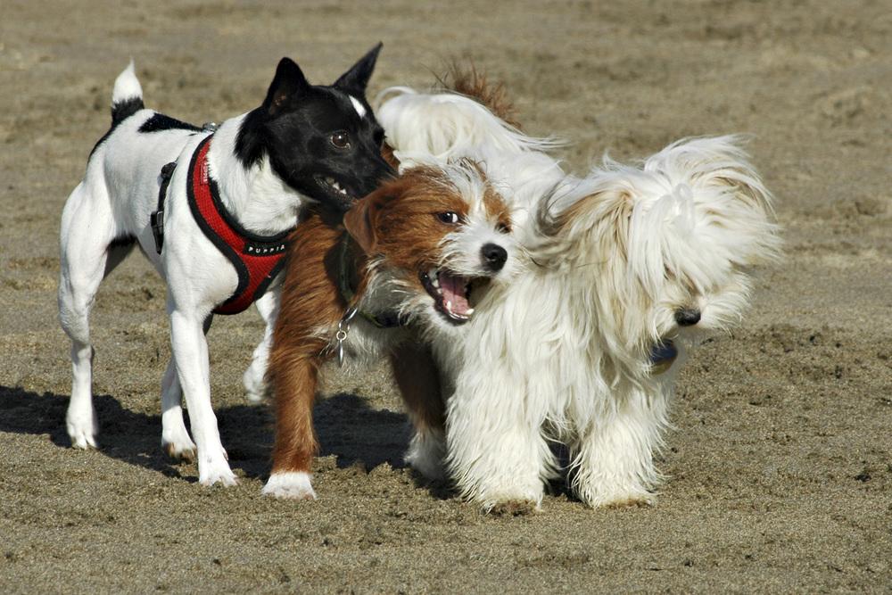 dodddonna_3 Dogs.jpg