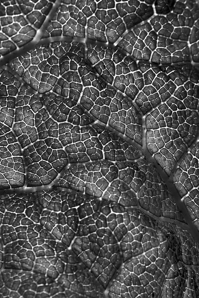Rangsisombatsiri Pongpiti_Leaf.jpg