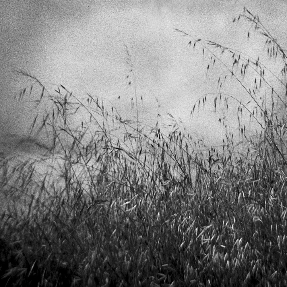 Watters_Holga_California Grass.jpg