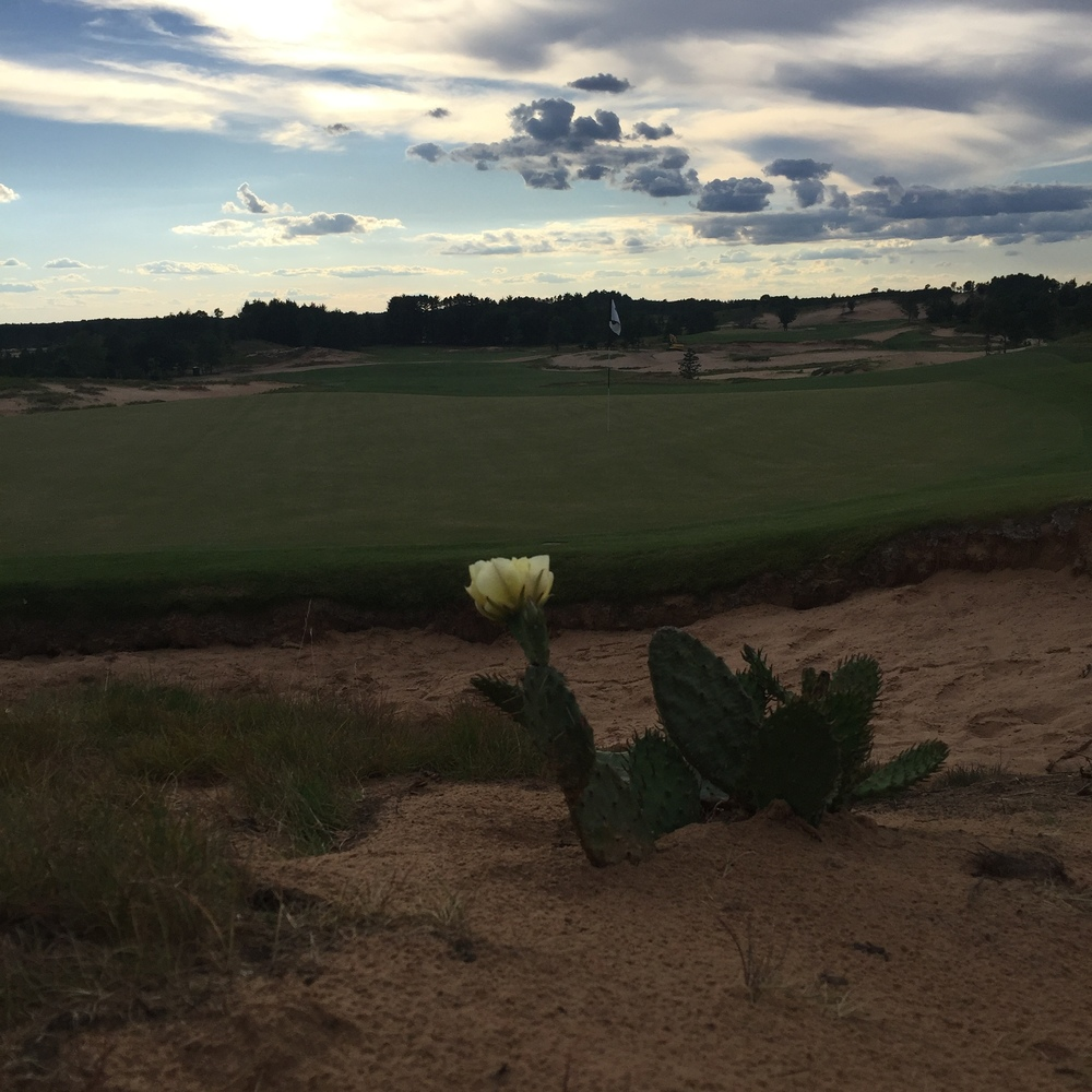 Looking back at the 4th hole at Sand Valley.