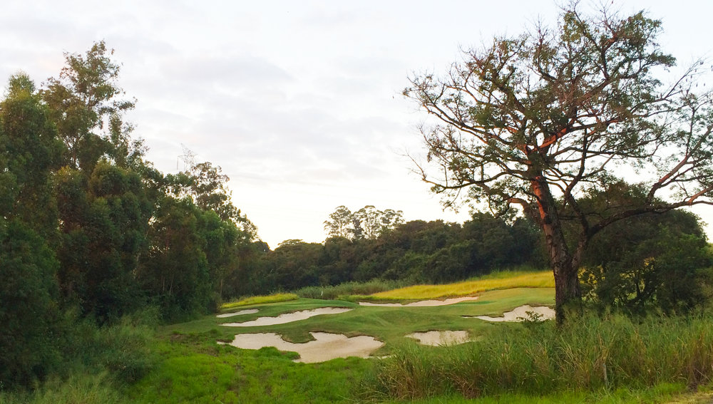 A giant Silk Floss Tree fills the foreground of the par 3 14th at Fazenda Boa Vista, lending beauty, mystery and authenticity.