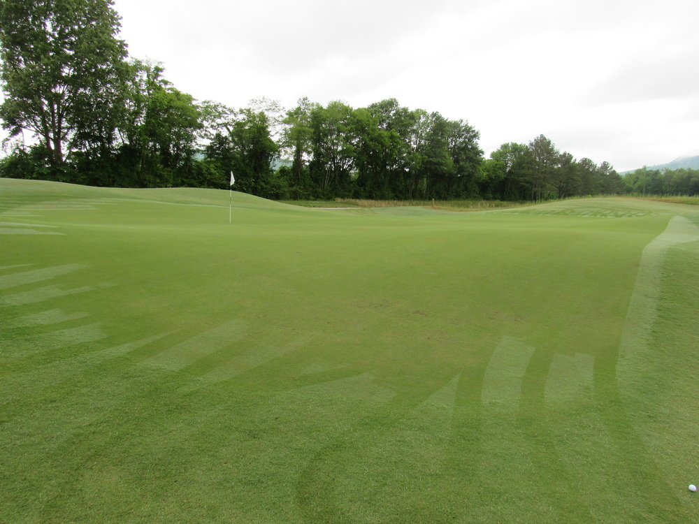 first green from left.jpg