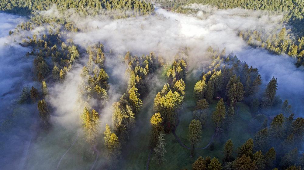 northwoods fog.jpg