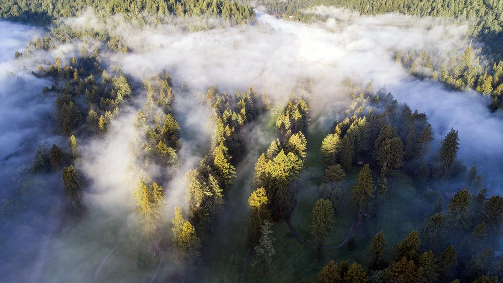 Fog .jpg