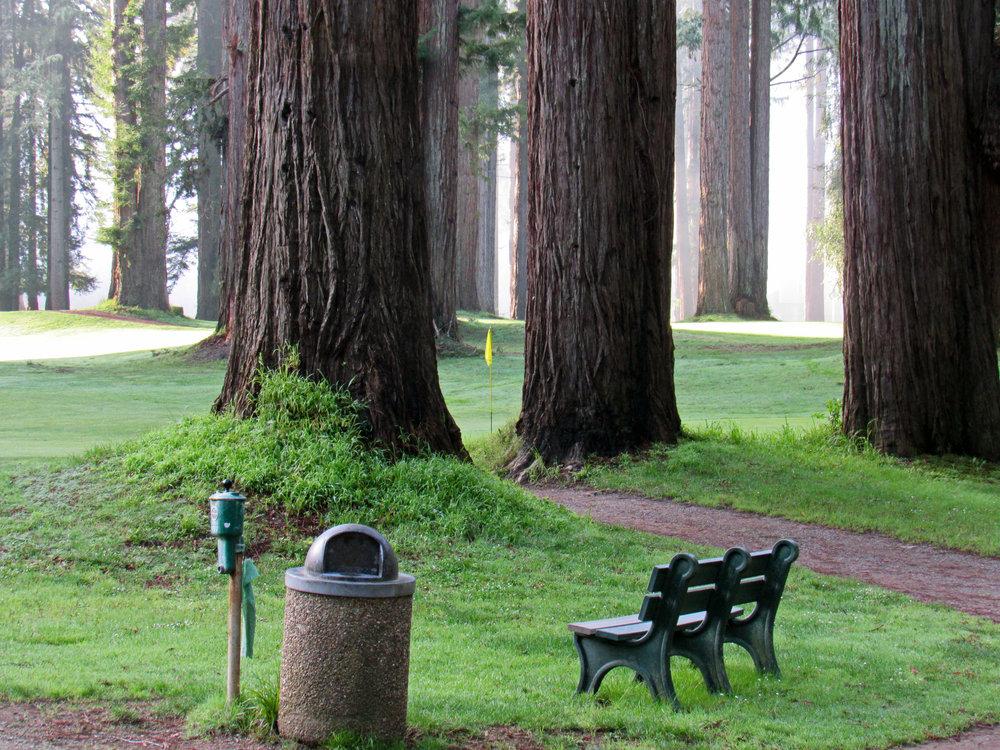 pin trees.jpg