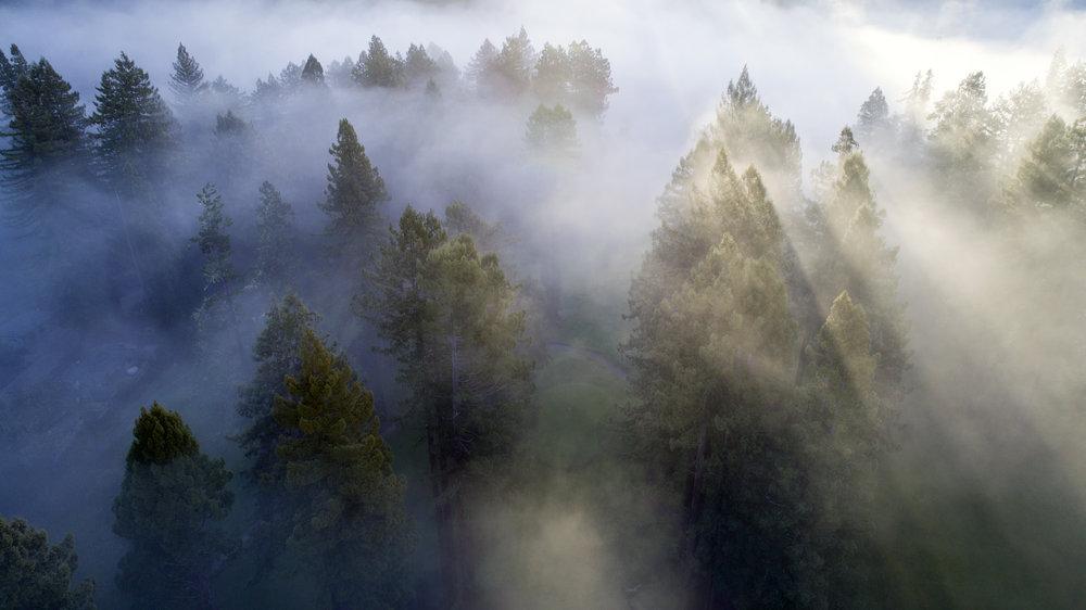 sun fog dope.jpg