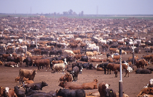 The Meat and Dairy industry use 47% of all consumptive water in California.