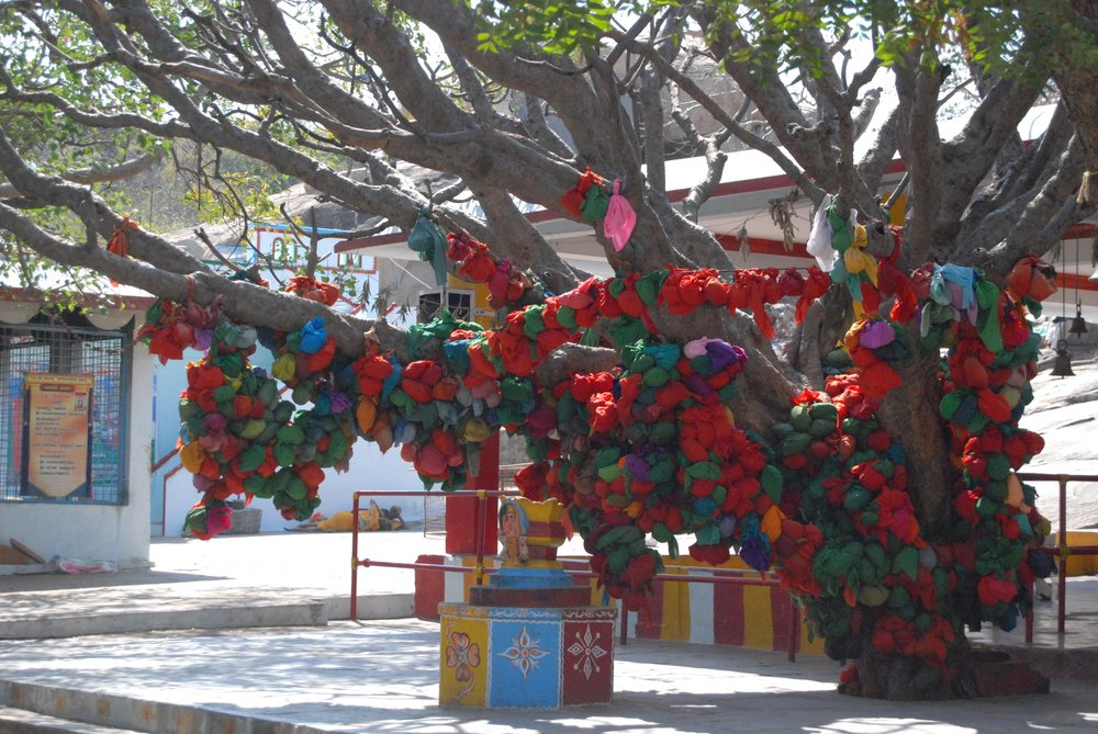 India- Wishing Tree.jpg