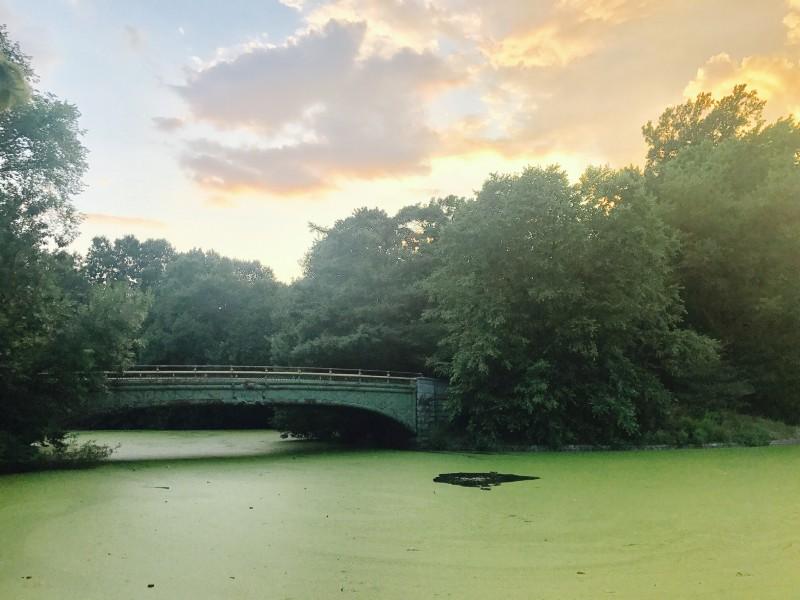 algae bloom, Prospect Park,Brooklyn