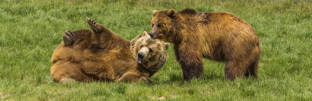 Bear Pair.JPG